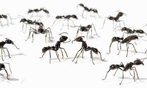 الگوریتم مورچه ها
