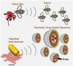 الگوریتم کلونی زنبور عسل