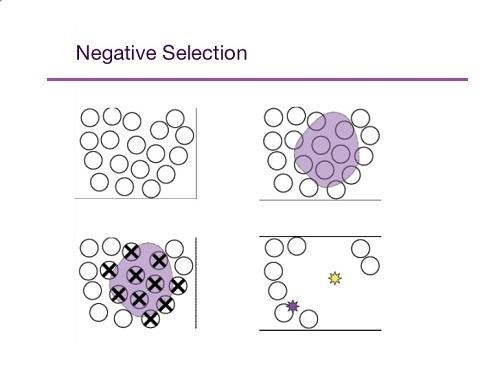 انتخاب معکوس (Negative Selection)