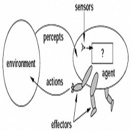 ساختار یک عامل